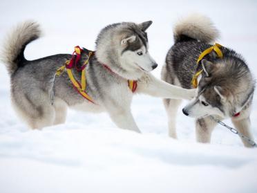 12 animale simpatice care se bucura de iarna mai mult decat tine