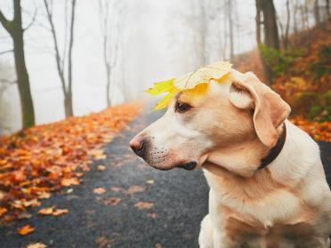 11 animale simpatice care nu se mai satura de toamna