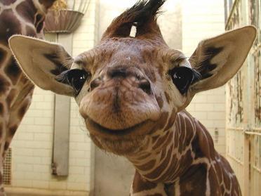 Iata 15 poze cu animale care zambesc pentru a-ti face ziua mai buna